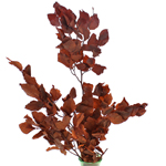 Single stem of copper beech bulk branch filler flowers sold as delivery near me