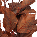 Wedding greenery copper beech bulk branches filler flowers sold near me