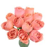 Coral Quartz Garden Wholesale Roses In a vase