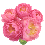 Coral Charm Peony in a vase