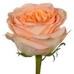 Country Home Peach Garden Rose Stem