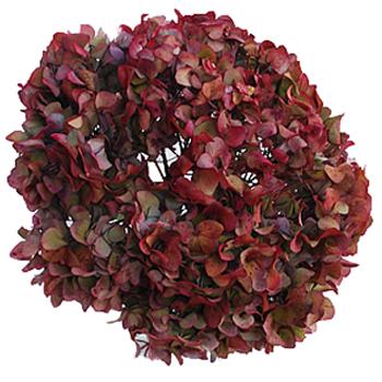 Cranberry Antique Enhanced Hydrangea Up Close