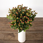 Cream and red hypericum berry for flower delivery