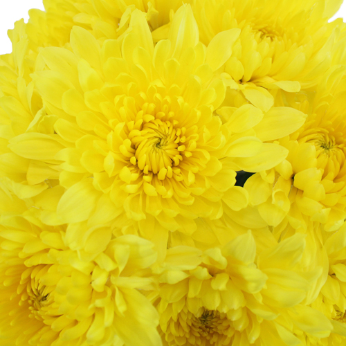 Cremon Yellow Flower
