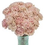 Creola Dusty Rose Carnation Flowers In a vase