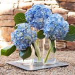 Dark Blue Hydrangea Wholesale Flower Trio Centerpiece
