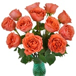 Dark Coral Garden Wholesale Roses In a vase