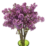 Wholesale Lilac Spring Flower
