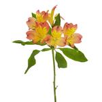 Dark Orange alstroemeria Wholesale Flower Stem