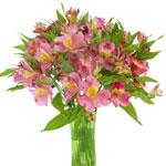 Dark Raspberry Pink Peruvian Lilies Alstroemeria Flowers in a Vase