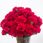 Darling Red Carnation Flowers In a vase