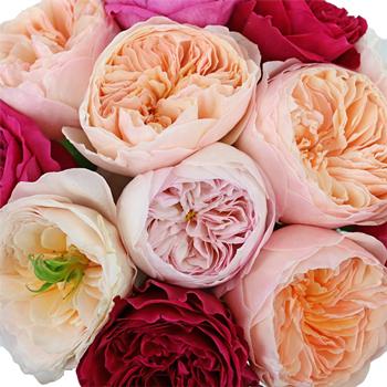 David Austin Assorted Garden Roses up close