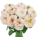 David Austin Charity Garden Wholesale Roses In a vase