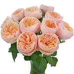 David Austin Peach Wholesale Garden Roses In a vase