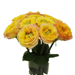 Daybreak Green Eyed Garden Wholesale Roses In a vase