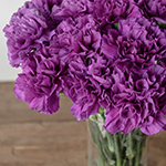 Deep Purple Carnation Flowers In a vase Close up