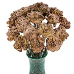 Dianthus Sepia Carnation Flowers In a vase