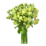 Diosa Lime Green Spray Wholesale Roses In a vase