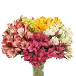 Warm Farm Mix alstroemeria Wholesale Flower Bunch in vase