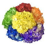 Airbrushed Rainbow Assorted Hydrangeas in a Bunch