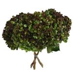 Antique Hydrangea Charcoal Flower Wholesale Flower Bunch in Hand
