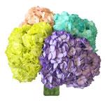 Assorted Enhanced Hydrangea Wholesale Flower Bunch in Hand
