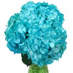 Caribbean Blue Enhanced Hydrangea in a Bunch