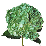 Mossy Green Wholesale Bunch