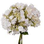 Wedding White Hydrangea Wholesale Flower Bunch