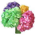 Assorted Enhanced Hydrangeas Wholesale Flowers in a Bunch in Hand
