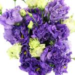 Double Alissa Blue Purple Lisianthus Wholesale Flower Upclose