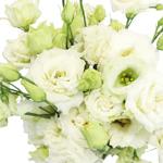Double Alissa White Lisianthus Wholesale Flower Upclose