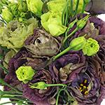 Double Rosanne Black Pearl Wholesale Flower Upclose