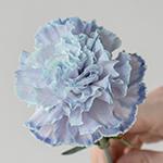 Dusty Blue Wedding Flower Carnation Stem