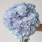 Dusty Blue Wedding Carnation Flowers in a Hand