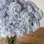 Dusty Blue Wedding Flower Carnation in a Vase Up Close