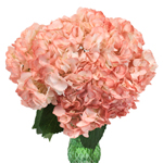 Dusty Rose Airbrushed Hydrangea in a Vase