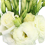 Lisianthus White Wholesale Flower