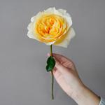 Effie Ausgrey Light Orange Garden Rose Stem