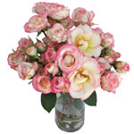 Electra Light Pink and White Spray Wholesale Roses In a vase