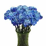 Elite Blue Tinted Carnation Flowers In a vase
