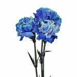 Elite Blue Tinted Carnation Flower Bloom