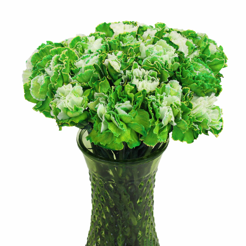 Elite Green Tinted Carnation Flowers In a vase