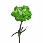 Elite Green Tinted Carnations side stem