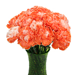 Elite Orange Tinted Carnation Flowers In a vase
