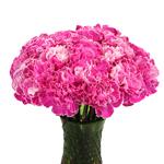 Elite Pink Tinted Carnation Flowers In a vase