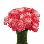 Elite Red Tinted Carnation Flowers In a vase