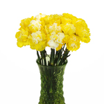 Elite Yellow Tinted Carnation Flowers In a vase