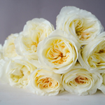 Ella Auswagsy White Garden Rose Bunch Close Up