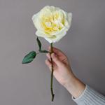 Ella Auswagsy White Garden Rose Stem